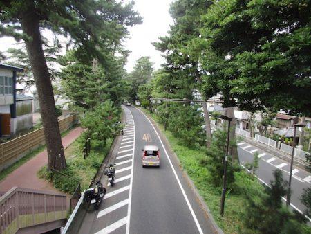大磯に残る東海道の松並木