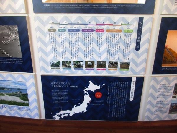 蕪島休憩所のウミネコの展示