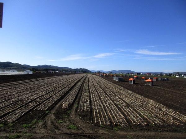 いかにも北海道らしいジャガイモの収穫風景