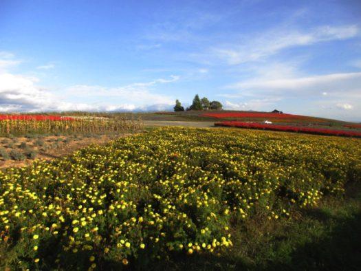 美馬牛峠の花畑