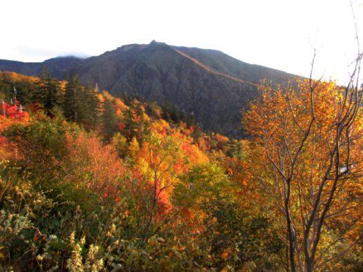 十勝岳温泉に近づくときれいな紅葉!