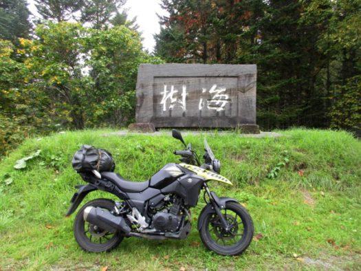 国道38号の樹海峠