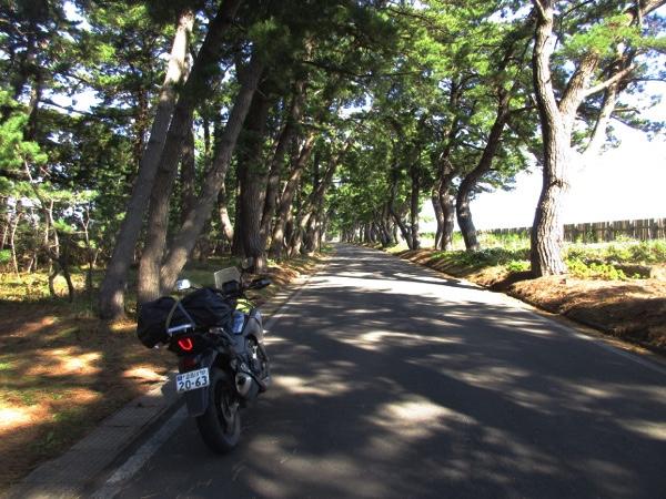 松前街道(奥州街道)の松並木