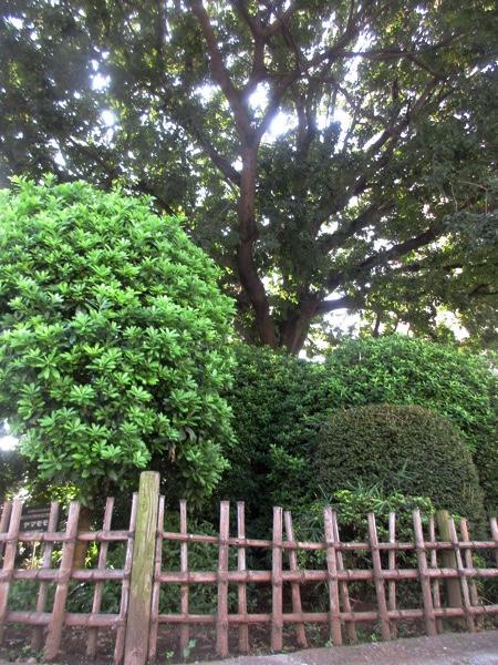 板橋宿の「縁切り榎」