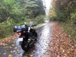 濡れ落ち葉の上を走る